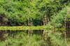 Pixaim River scene