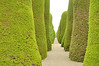 Well manicured Cupressus sempervirens, the Mediterranean Cypress (also known as Italian, Tuscan, or Graveyard Cypress, or Pencil Pine) line the pathways of the cemetary