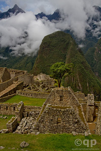 MACHU PICCHU RUINS AND TREE