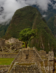 MACHU PICCHU RUINS AND TREE CLOSEUP