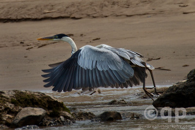 HERON LIFT OFF