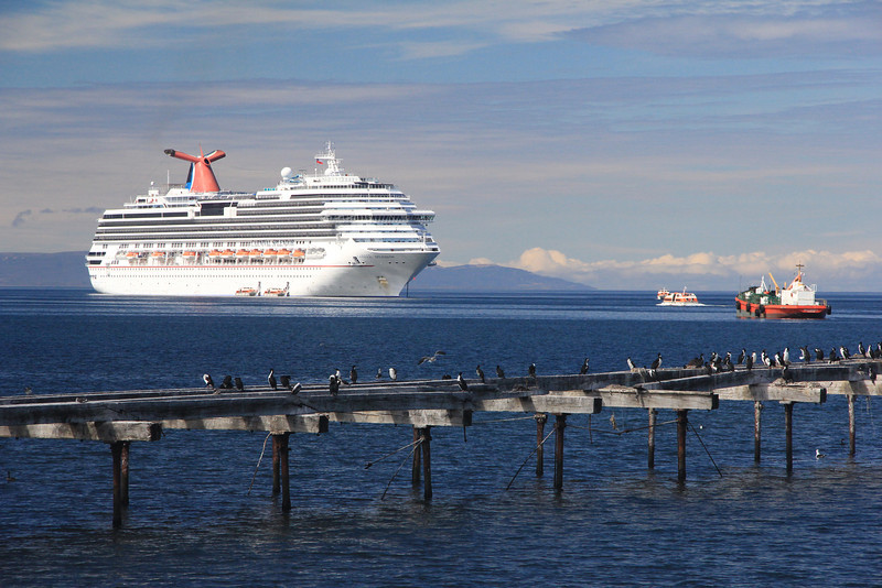 Cruise Ship and Austral Cormorants (not Penguins), Punta Arenas, Chile