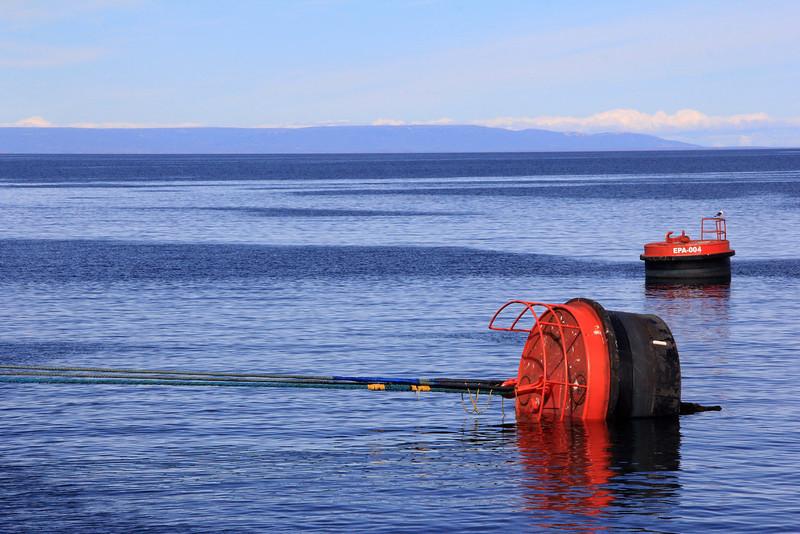 Punta Arenas, Chile 02-24-13 (154