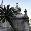 Palm Tree and Grave in Recoleta Cemetery