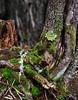 Boreal Forest, Cerro Mirador, Punta Arenas_vPanorama1 x3