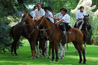 Gauchos ride a breed called the Argentina Criollo or creole.  The horse is fast, short legs and wide body.  It was bred to handle the cattle of the pampas.