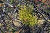 Epiphyte, Tierra del Fuego NP, Bay of Natalia