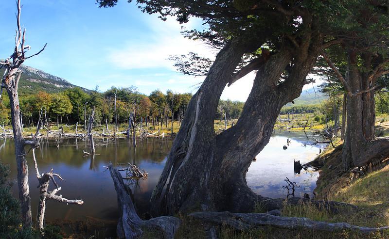 Beaver Pond Panorama