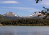 Black Necked Swans, Tierra del Fuego NP