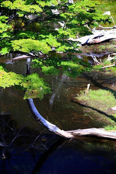 Tierra del Fuego NP, Beaver Pond (157