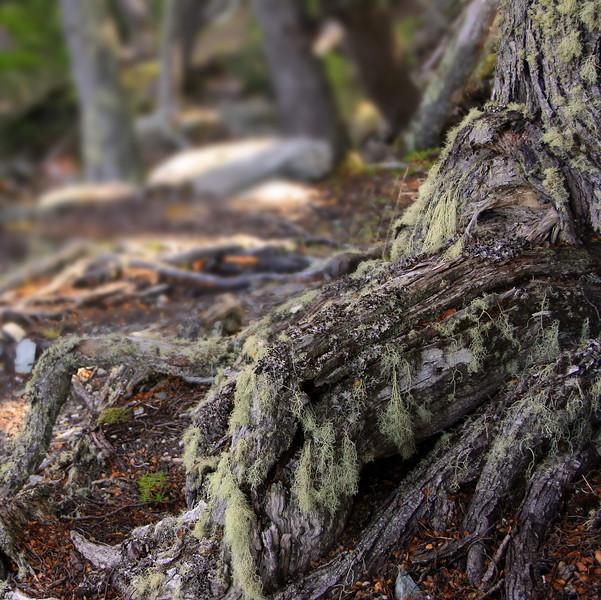 Tierra del Fuego NP, Bahia Ensenada Trail