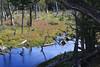 Tierra del Fuego NP, Beaver Pond