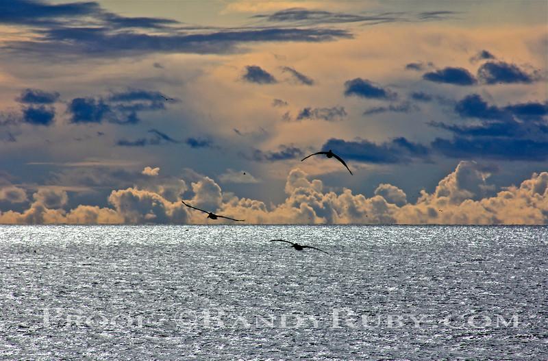 Metallic Sea.~<br /> 11/4/11
