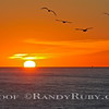 Fling Birds at Sunset.~<br /> Taken: 11-29-12