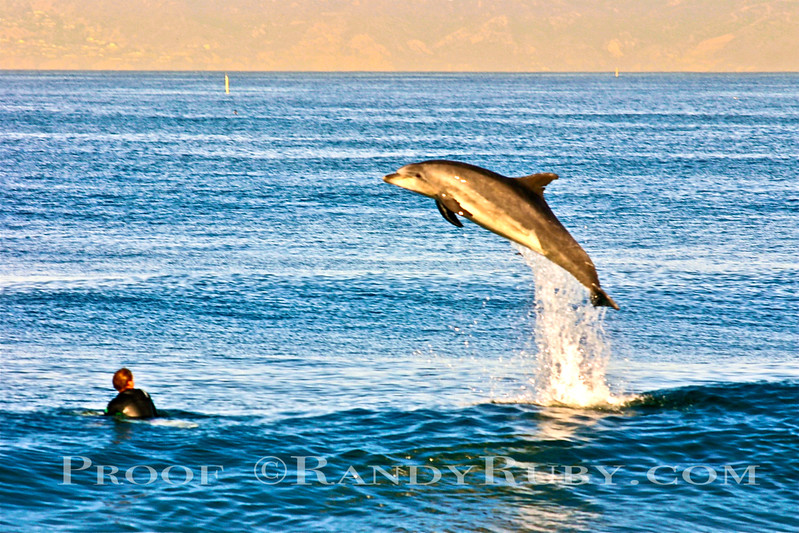 Jump for Joy.~        The Dolphin Snorty and the Surfer:  Tracy Constantine Parkes. Tracy's Dad, in the printing business. Said Randy should do something with this photo. Before I was ever thinking about selling my photos. Notice the eyes meeting the eyes. Available in Handmade Cards, contact me directly with any needs you have.~<br /> Taken: 11-12-2010