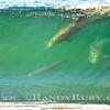 Dolphin T V<br /> 11/12/10
