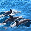 Loving Life Dolphin Style.~<br /> Taken:  9/19/13
