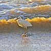 Beautiful Snowy Egret.~<br /> Taken: 3-22-12