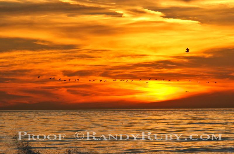 Pelican & Sunset~