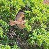 Red Tail Hawk~<br /> Taken: 2-22-13