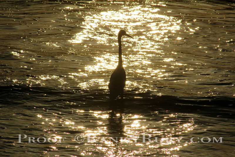 Egret in Winter Gold~