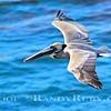 Blue Bird    2/24/15