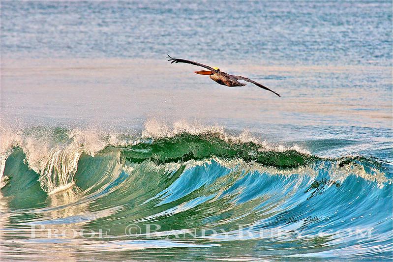 Winter Pelican Bliss.~<br /> taken: 1/6/11