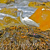 Seaweed Dance.~<br /> 4-26-13