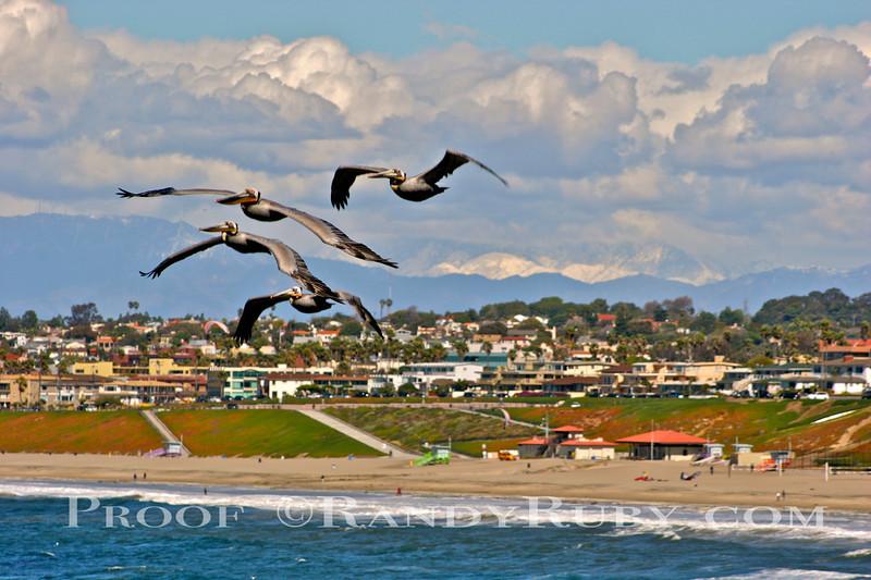 Pelicans & Snow~<br /> Taken: 2-26-11