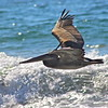 Happy Pelican.~<br /> Taken: 9/3/13