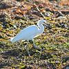Egret~<br /> Taken: 2-28-13