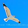Seagull  2-22-13~