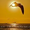 Spiritual Bird~<br /> Taken: 2-16-13