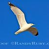 Free Bird~<br /> Taken: 2-16-13