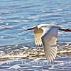 Snowy Boy the Egret~<br /> Taken: 2-28-13