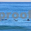 "Tim ""Aquaman/Dolphin"" Cunningham~<br /> 1-12-12"