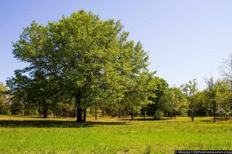 Cowpens National Battlefield, SC