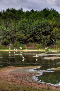 ibis-birds-3