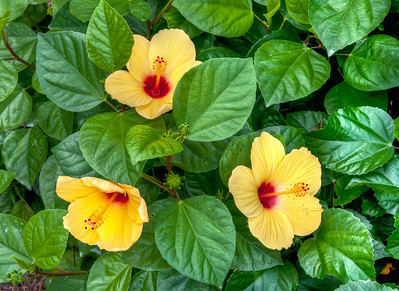 yellow-garden-flowers