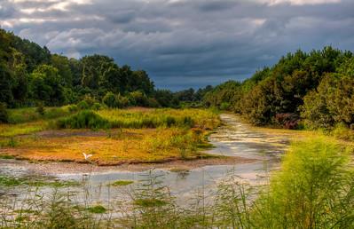 hilton-head-island-wildlife-preserve-2