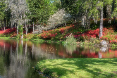 Azaleas at Middleton Place plantation