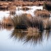 Marsh grass, Bear Island state park, Edisto Island