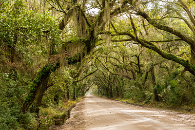 South Carolina-The Low Country