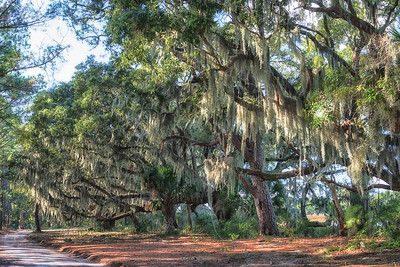 Grand oaks at Botany Bay, Edisto Island