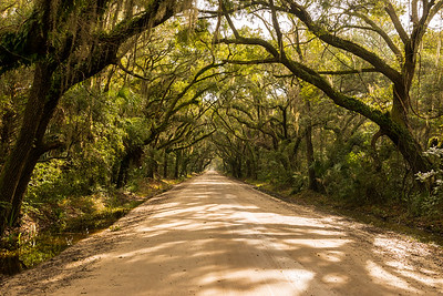 Avenue of oaks, Edisto Island
