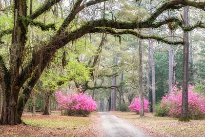 Entrance to Roxbury Park, Edisto Island