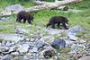 Brown_Bears_Alaska_2014_0004