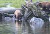 Brown_Bears_Alaska_2014_0019