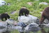 Brown_Bears_Alaska_2014_0183