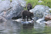 Brown_Bears_Alaska_2014_0176